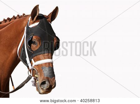 Face Of A Thoroughbred Racehorse