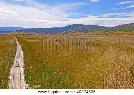 Trail Through A Natural Wetland