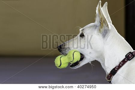 Dog With A Toy Of Tennis Balls