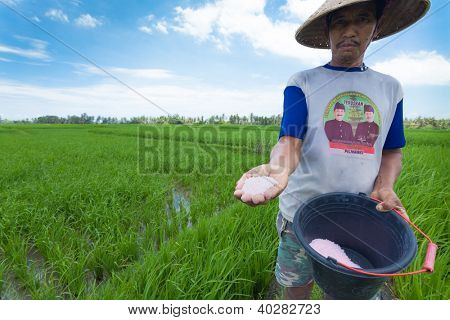 BALI - FEBRUARY 15. Rice farmer using nitrogen fertiliser on his field on February 15, 2012 in Bali, Indonesia. The UN says world rice harvest for 2012 should top 2011 crop, thanks to gains in Asia.