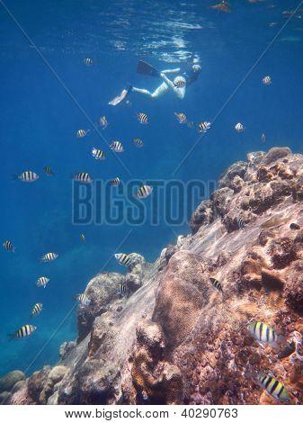 snorkeling diver