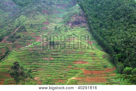 Border Of The Bwindi Impenetrable Forest In Uganda