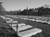 picture of embalming  - Rows of Civil war gravestones in the Greenwood Cemetery in Brooklyn  - JPG