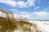 image of gulf mexico  - Siesta Key Beach is located on the gulf coast of Sarasota Florida with powdery sand - JPG