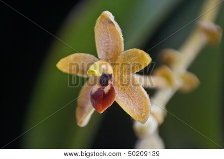 wild orchids in forest of Thailand