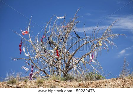 Dead Tree Covered In Womens Bras