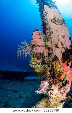 Hard And Soft Corals On The Mast Of An Underwater Shipwreck