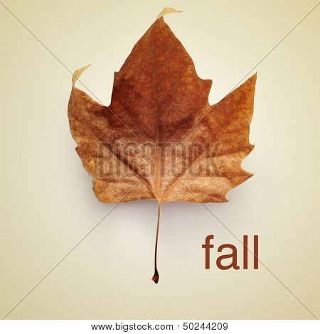 picture of a dried leaf and the word fall with a retro effect
