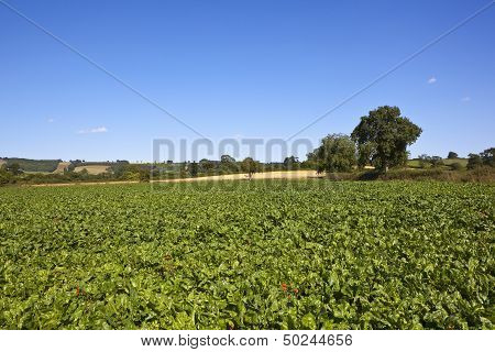 Scenic Mangold Fields