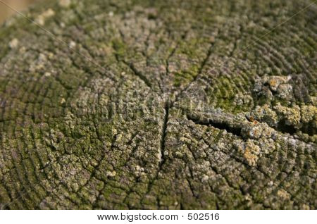 Olden Rotten Stump