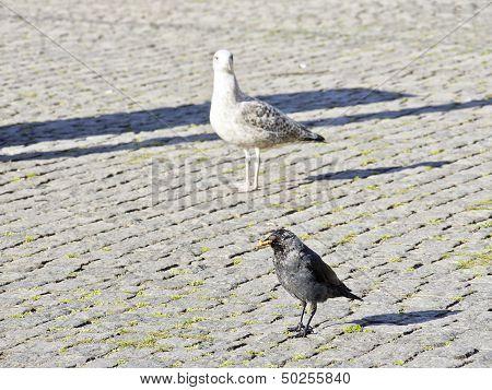Dirty Town Birds