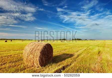 Mown field with straw bales