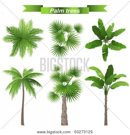 3 different palm trees - top and front view