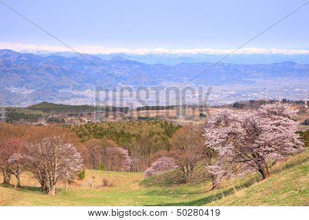 Cherry Tree And Snowy Mountain