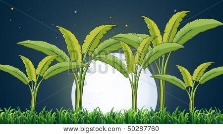 Ilustración de una plantación de banano bajo la luna llena blanca
