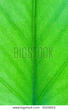 Macro de la hoja verde