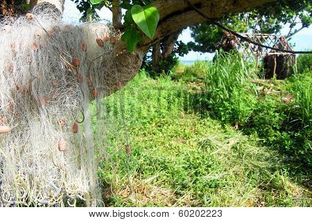 Fishing Net At Tree Near Abandoned House