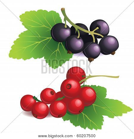 Clasters of black and red currants