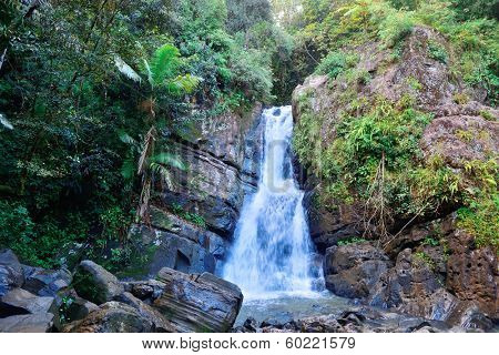 Waterfall in tropical rain forest in San Juan, Puerto Rico.
