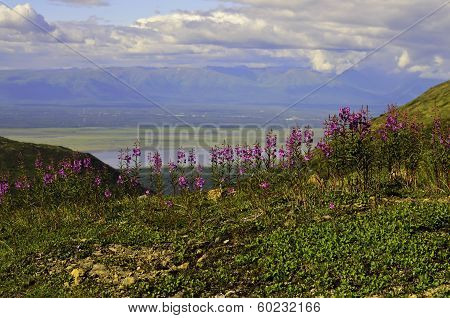 Fireweed peak