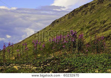 Hill side wild flowers