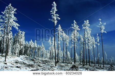 Winter nature in Tatranska Lomnica - High tatras mountains, Slovakia