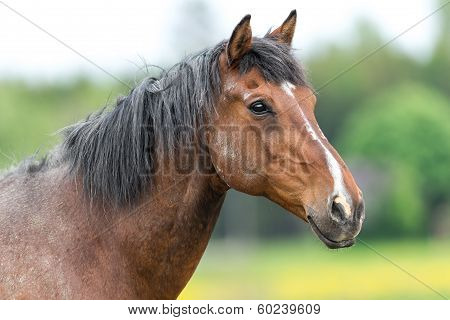 Stallion Just After A Fight