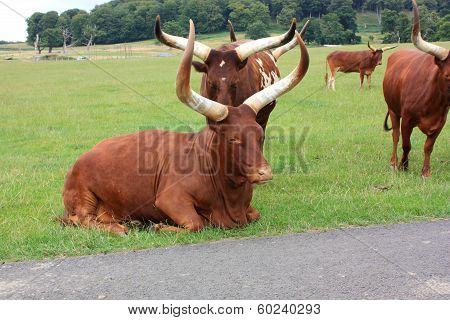 Two Horns