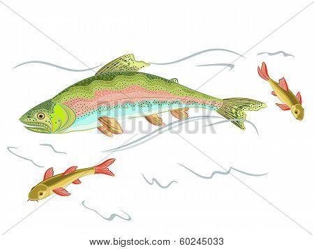 American Rainbow Trout