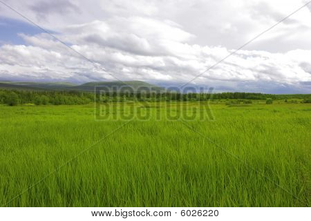 Green Summer Field And Hills