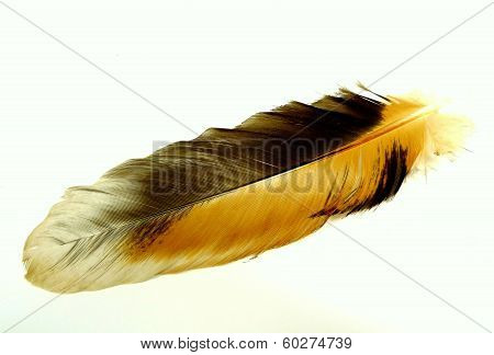 chicken feather