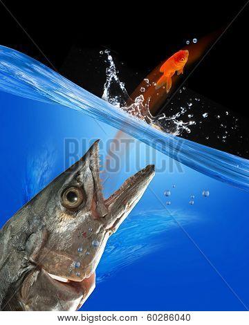 Catching Fish.