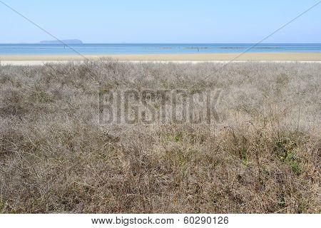 shrubbery beach