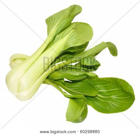 Pak Choi Chinese Cabbages