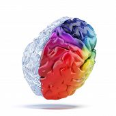 pic of left brain  - Colored brain isolated on a white background - JPG