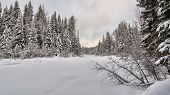 stock photo of blanket snow  - Fresh blanket of snow in a forest clearing - JPG