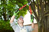 foto of cutting trees  - Professional gardener pruning a tree - JPG