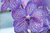 stock photo of orquidea  - Collection of orchid flower on green back ground - JPG