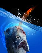 stock photo of catching fish  - Monster fish going after small gold fish - JPG