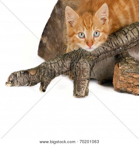 Cat on firewood