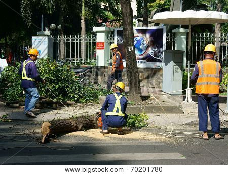 Worker Sawing Branch Tree On Street