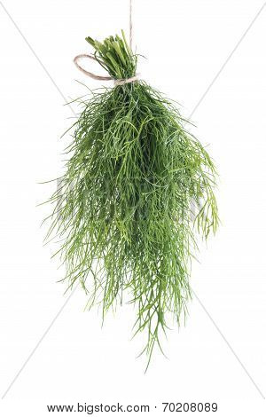 Bunch Of Fresh Dill Leaves