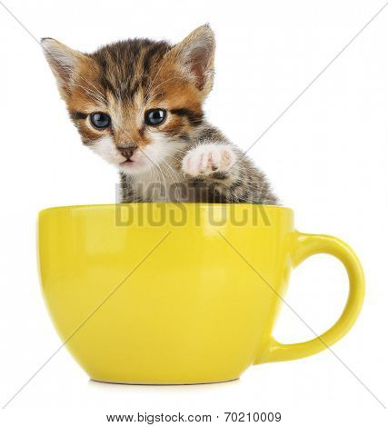 Cute little kitten in cup isolated on white