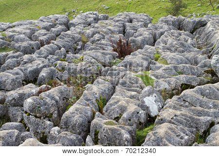 Limestone Pavement At Malham Cove, Yorkshire, England