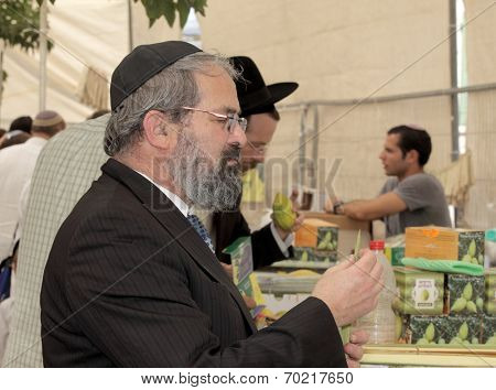 JERUSALEM, ISRAEL - SEPTEMBER 18, 2013: The religious Jew in a black skullcap carefully chooses ritual plant - myrtle for Sukkot.