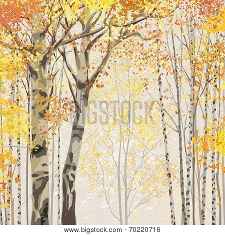 Birch grove in autumn time