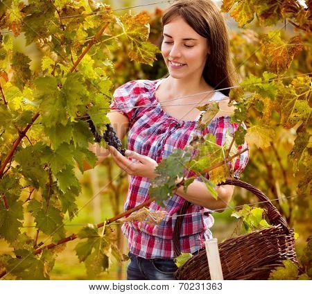 Young female rape picker in vineyard
