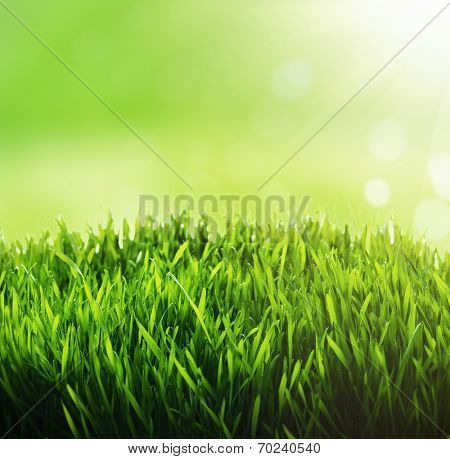 Green grass background. Fresh green grass with blury green bokeh sunny background.