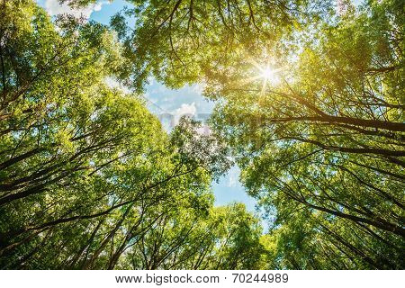 Sun Shining Through The Treetops