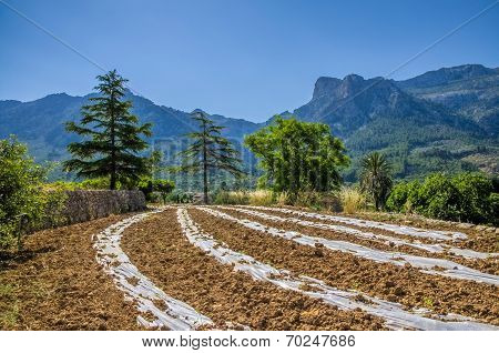 Countryside of Soller